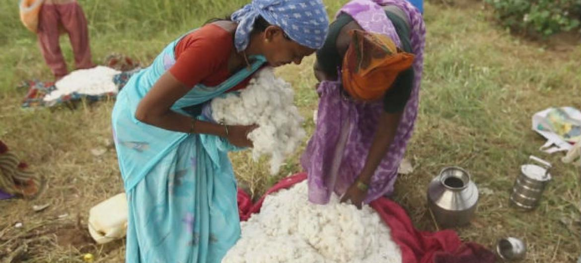 A new initiative designed to cut costs and improve cotton yields in India's Maharashtra state, is helping some of the country's most vulnerable farmers.
