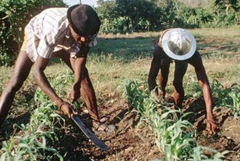 Farming for development in Haiti.
