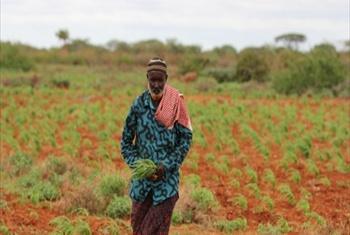 Photo:FAO/Frank Nyakairu