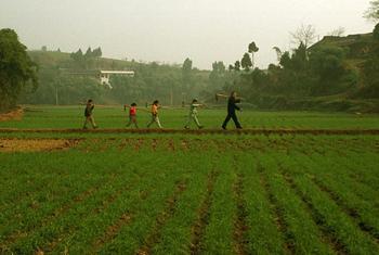 A grandfather walking through a rice field followed by his grandchildren. ©FAO/Antonello Proto