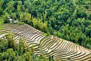Soil degradation (