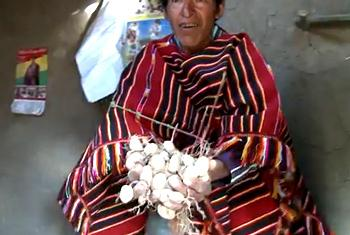 Harvesting potatoes in Bolivia. (IFAD video capture)