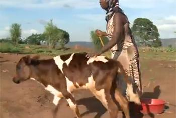 Pacifique with her cow. (IFAD video capture)