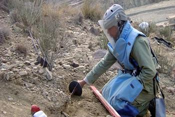 Demining engineer of the Mine Action Programme of Afghanistan clears an anti-personnel landmine.