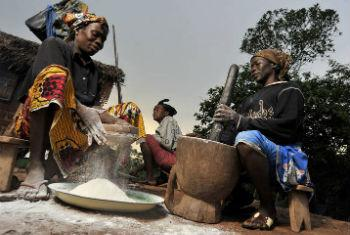 Women process cassava for food preparation in Mbaiki, Central African Republic.