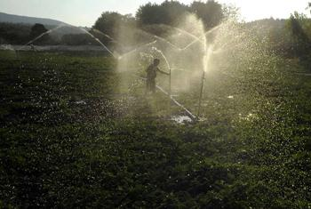 Record temperatures and dry conditions are set to last,UN experts say, as farmers protect their harvest.