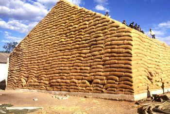 A maize haystack in Zambia. Robust inventory levels are keeping agricultural commodity prices are stable.