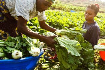Africa has made progress in cutting the number of hungry people, according to the UN Food and Agriculture Organization (FAO).