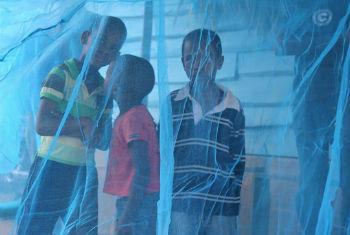 Children surrounded by protective malaria net in the Dominican Republic.