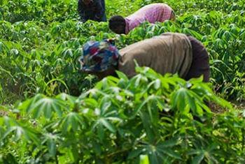 Agriculture is the economy's key sector in Benin, West Africa. File
