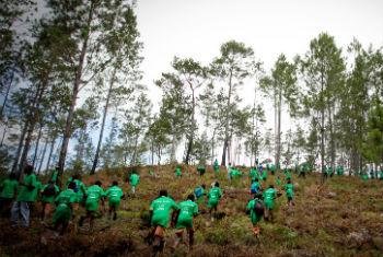 Massive tree-planting campaign at one of the Haiti's last pine forests which had been depleted for charcoal production and to make room for farm land. (File)