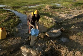 A woman pours water from an irrigation canal into fields near the Koroyomme area of Timbuktu.