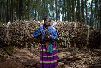 Dorze Woman travelling through the mountains of Entoto (Ethiopia) carrying eucalyptus branches and leaves to sell at the local market. File