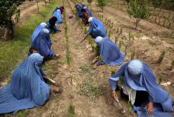 Women tend crops in rural Afghanistan.