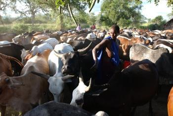 A Maasai woman searching for a cow to milk. ©FAO/Giuseppe Bizzarri