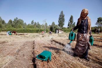 Woman waters seedlings in the Lake Tana area of Ethiopia's Amhara Region.