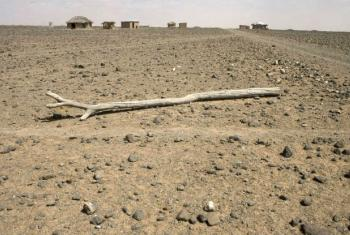 A parched field in Kenya where drought has been especially devastating to sub-Saharan agriculture. File
