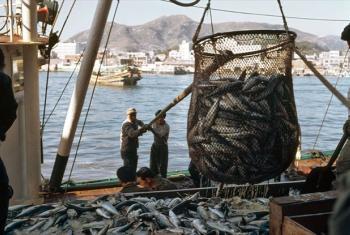 Fishermen unload their catch of mackerel at a fish market. UN File Photo/M Guthrie