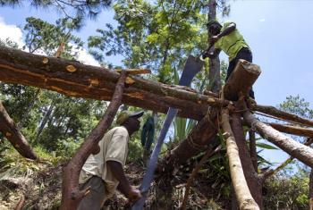 Men chop down trees near Port-au-Prince, Haiti.