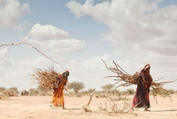 Climate change is a growing cause of displacement in Africa, where some areas have been devastated by drought.