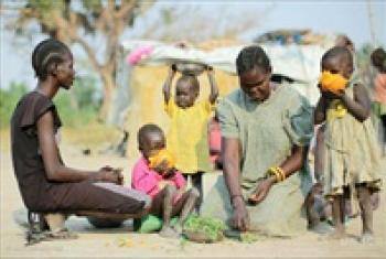 Mothers feed their children with grass and palm nuts.