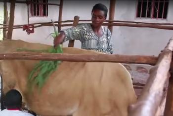 Rwanda farmers. IFAD (video capture)
