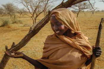 Gum arabic farmer from the Jawama'a tribe in El Darota, Northern Kordofan, Sudan. File