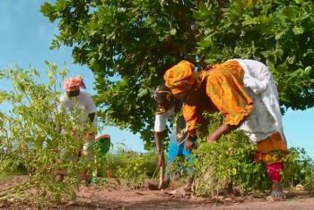 Farmers in South East Senegal.