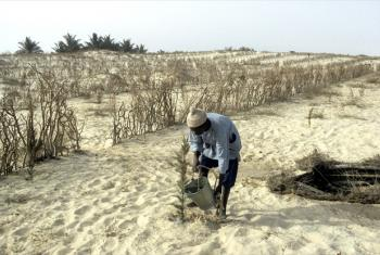 A farmer in the drought-affected area of Senegal watering plants.