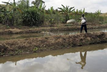 A Tanzanian maintains a fish pond.