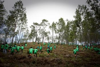 To commemorate International Environment Day (annually 5 June) hundreds of Haitian students take part in a massive tree-planting campaign at a pine forest, one of Haiti's last, four hours drive from Port-au-Prince. The once-great forest has been depleted