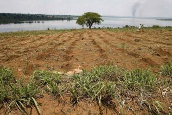 Farmland along the banks of Rwanda's Lake Sake. File