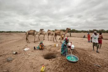 In Somaliland and Puntland, close to two million people are affected by the drought amid the El Niño phenomenon. WFP/Petterik Wiggers (file photo)