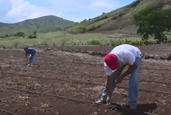 Irrigation project in Guatemala. (Screen grab from IFAD video)