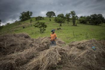 A farmer in Tanzania uses hay to help mulch and prevent soil erosion.