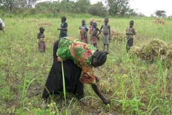 South Sudanese farmer, sows the seeds for her maize crop for next year.