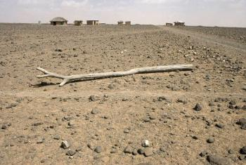 A parched field in Kenya where drought has been especially devastating to sub-Saharan agriculture.