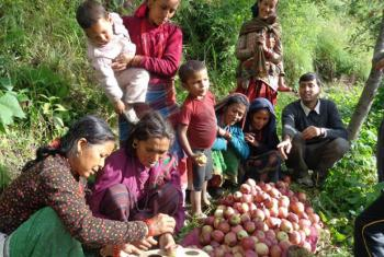 Women in Nepal learn how to grade apples for sale.