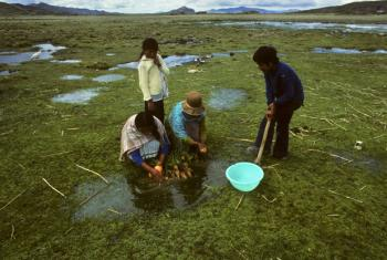 Children washing carrots and potatoes on the Altiplano in Bolivia.