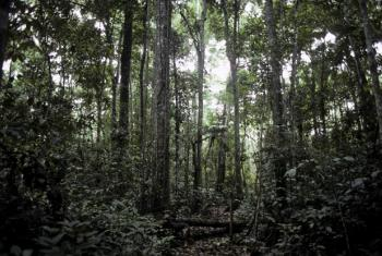 The rainforest showing destruction of the canopy in the state of Acre in Western Brazil. (file)