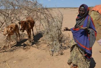 Drought in Ethiopia has led to successive failed harvests and widespread livestock deaths in some areas.