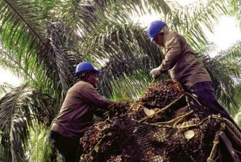 Workers in Colombia's palm oil sector.