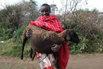 A Maasai pastoralist holding a pregnant ewe in Narok, Kenya.
