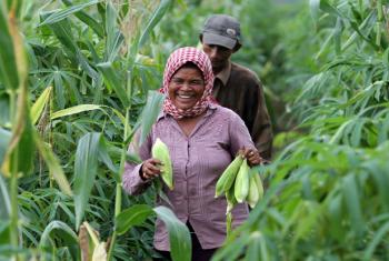 Thoeun harvests corn from her farm in Kampong Cham, Cambodia.