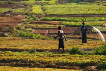 Watering crops in the Democratic Republic of Congo.