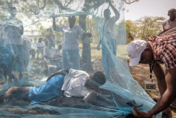 The African continent bears the greatest malaria burden.