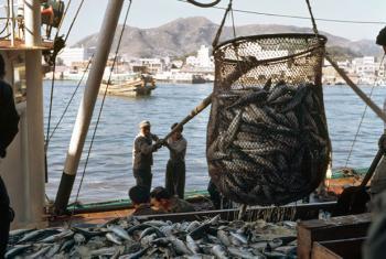 Fishermen unload their catch of mackerel at a fish market.