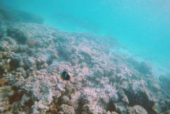 Bleached coral reefs in Zanzibar, Tanzania.