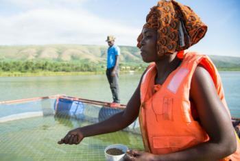 Congolese refugee Janine scatters brown pellets to feed white tilapia in Lake Rwamunga fish farm, in Uganda.