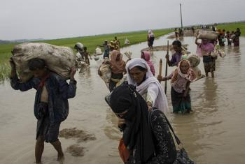 Rohingya refugees from Myanmar walk through paddy fields and flooded land after they fled over the border to Cox's Bazar, Bangladesh, where more than half a million Rohingya Muslims have found refuge.
